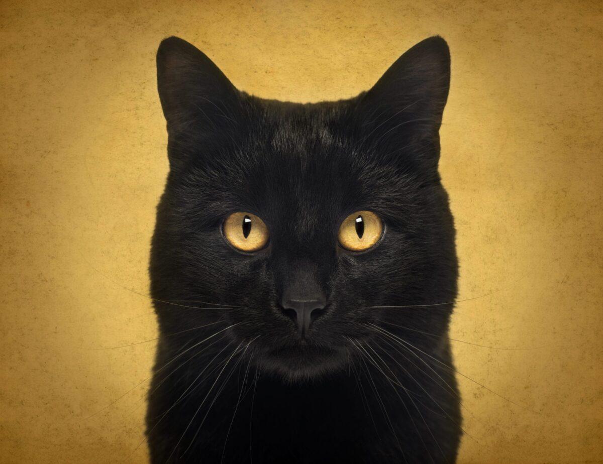 باورهای اشتباه در مورد گربه سیاه