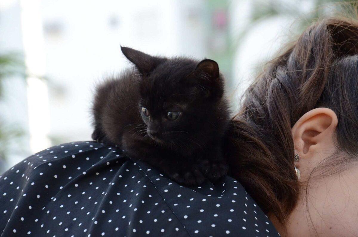خرافات درباره گربه سیاه