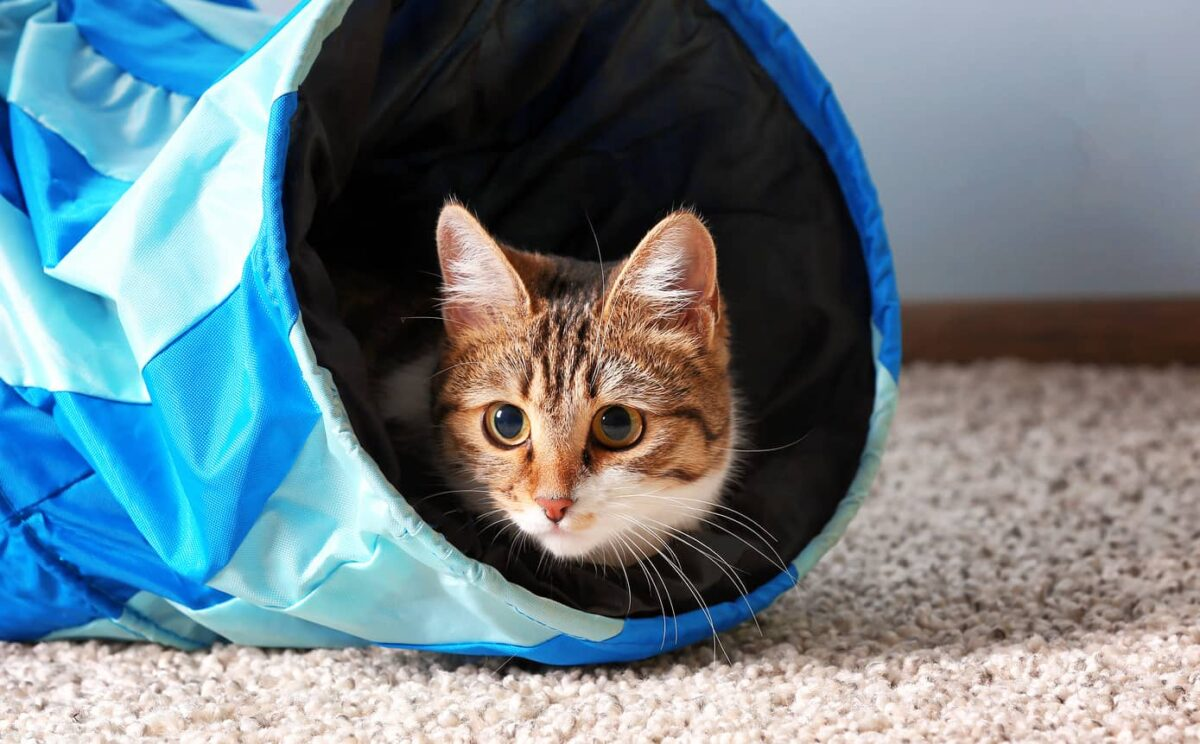 راهنمای خرید انواع مدل تونل بازی گربه + آموزش ساخت تونل گربه در منزل