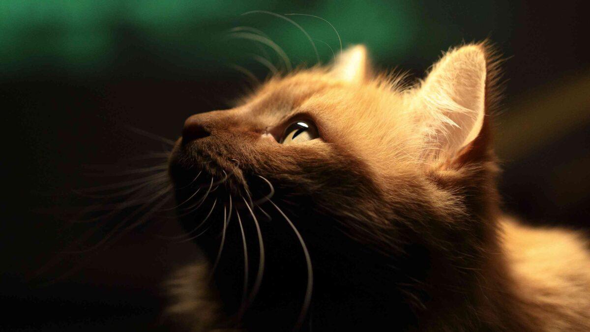 دید گربه در تاریکی