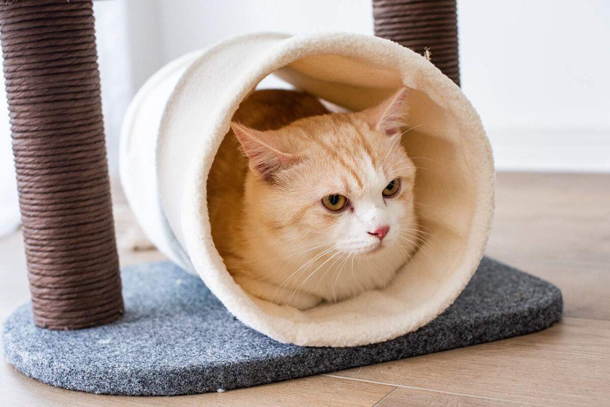 تونل درخت گربه