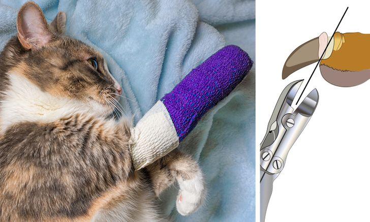 کشیدن ناخن های گربه