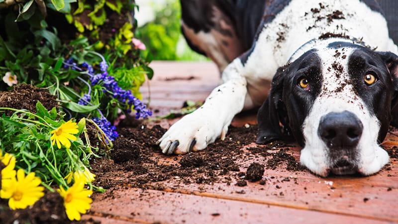 مشکلات رفتاری سگ ها در خانه