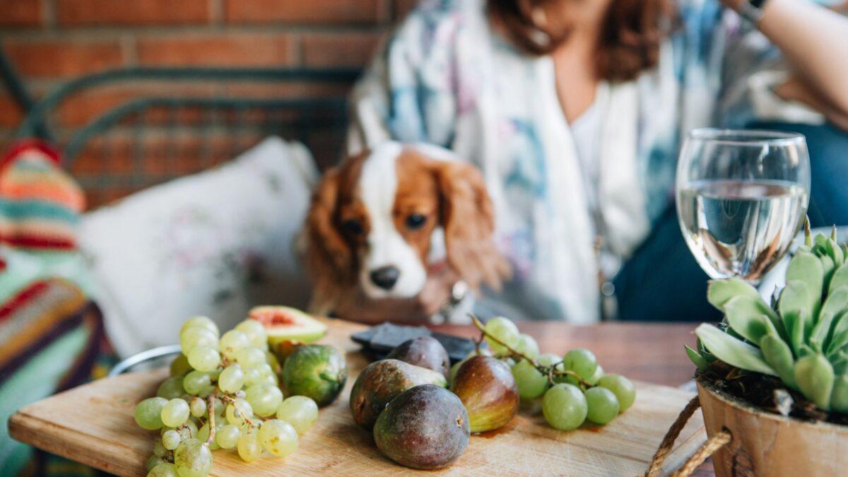 غذاهای خطرناک برای سگها
