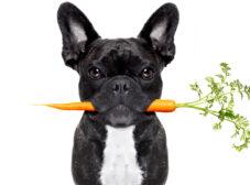 معرفی خوراکیهای مفید برای سگ