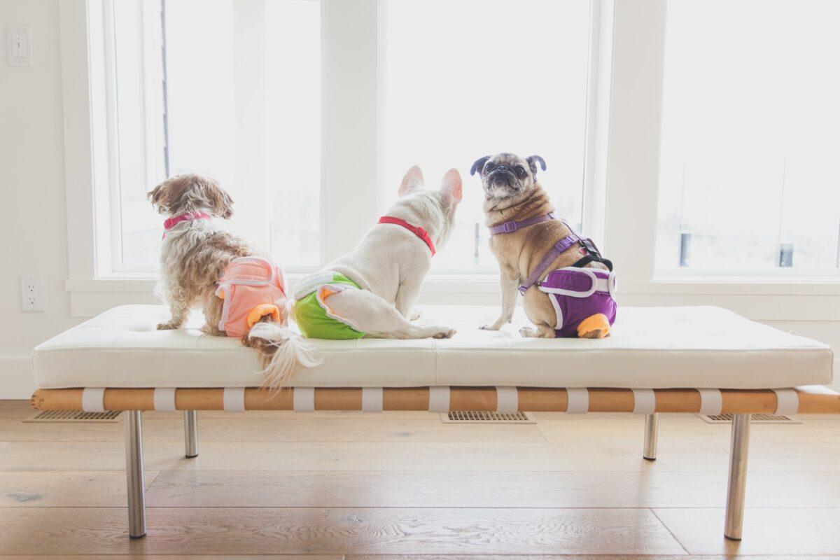 انواع پوشک سگ