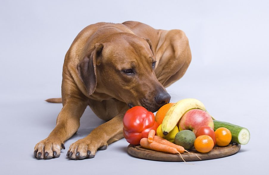 میوهها و سبزیجات مفید برای سگ