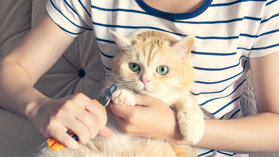 بهترین راه گرفتن ناخن گربه