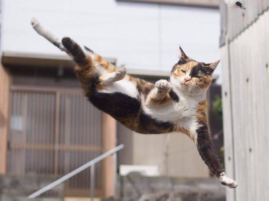 گربه در حال سقوط از ارتفاع
