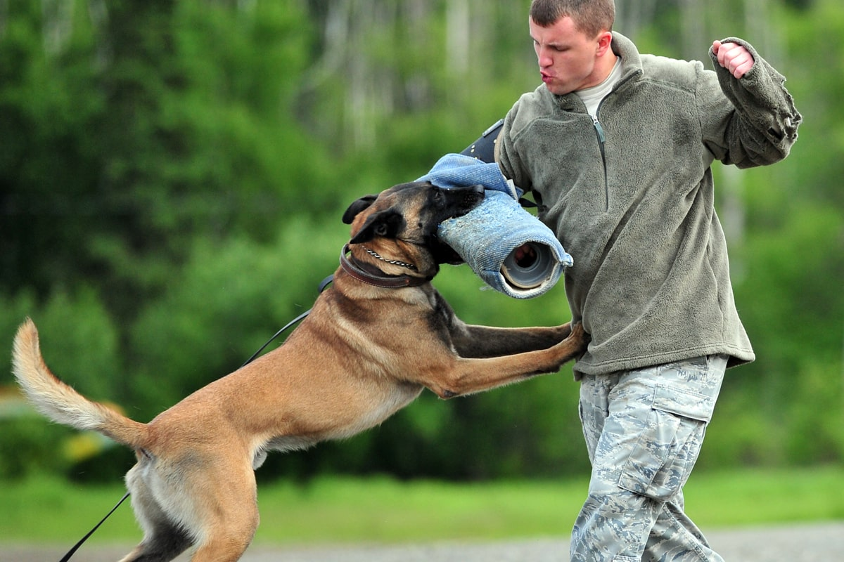 تربیت سگ مالینویز گارد