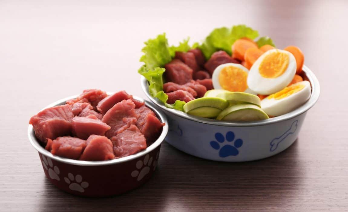 غذای خانگی برای سگ