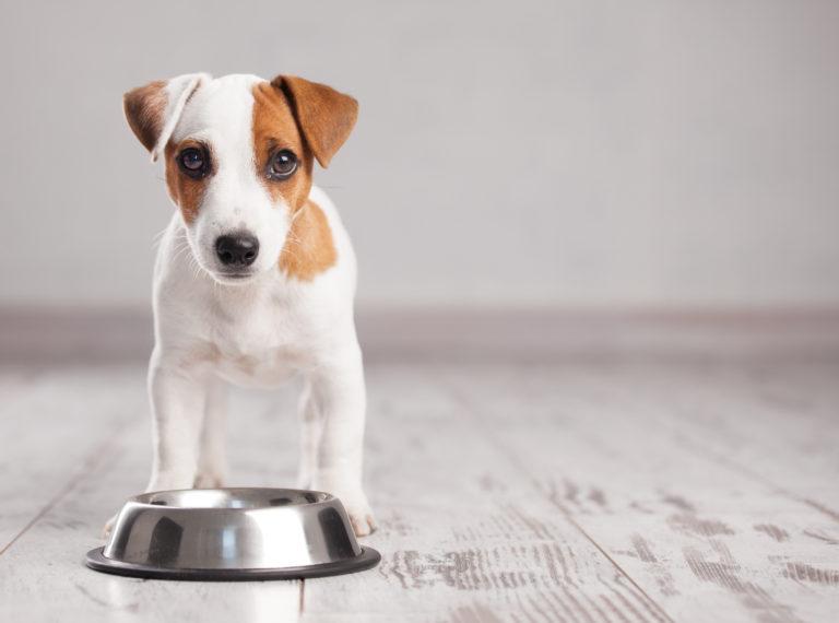 انتخاب ظرف غذا برای سگ