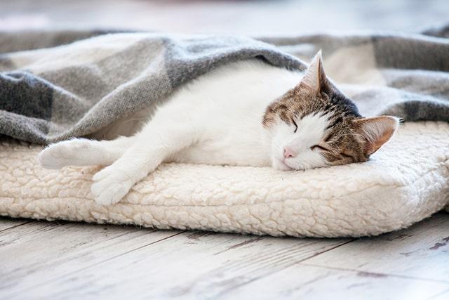 درمان سرماخوردگی گربه در خانه