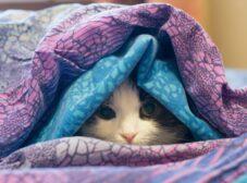 سرماخوردگی گربه چیست؟ علائم، تشخیص و نحوه درمان