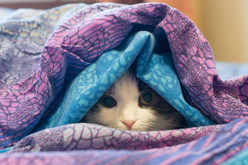 سرماخوردگی در گربه ها