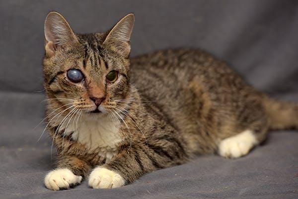 مشکلا چشمی بچه گربه با چشمهای مات