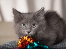 مراقبت از چشمهای گربه؛ شناخت و پیشگیری از مشکلات چشمی گربه