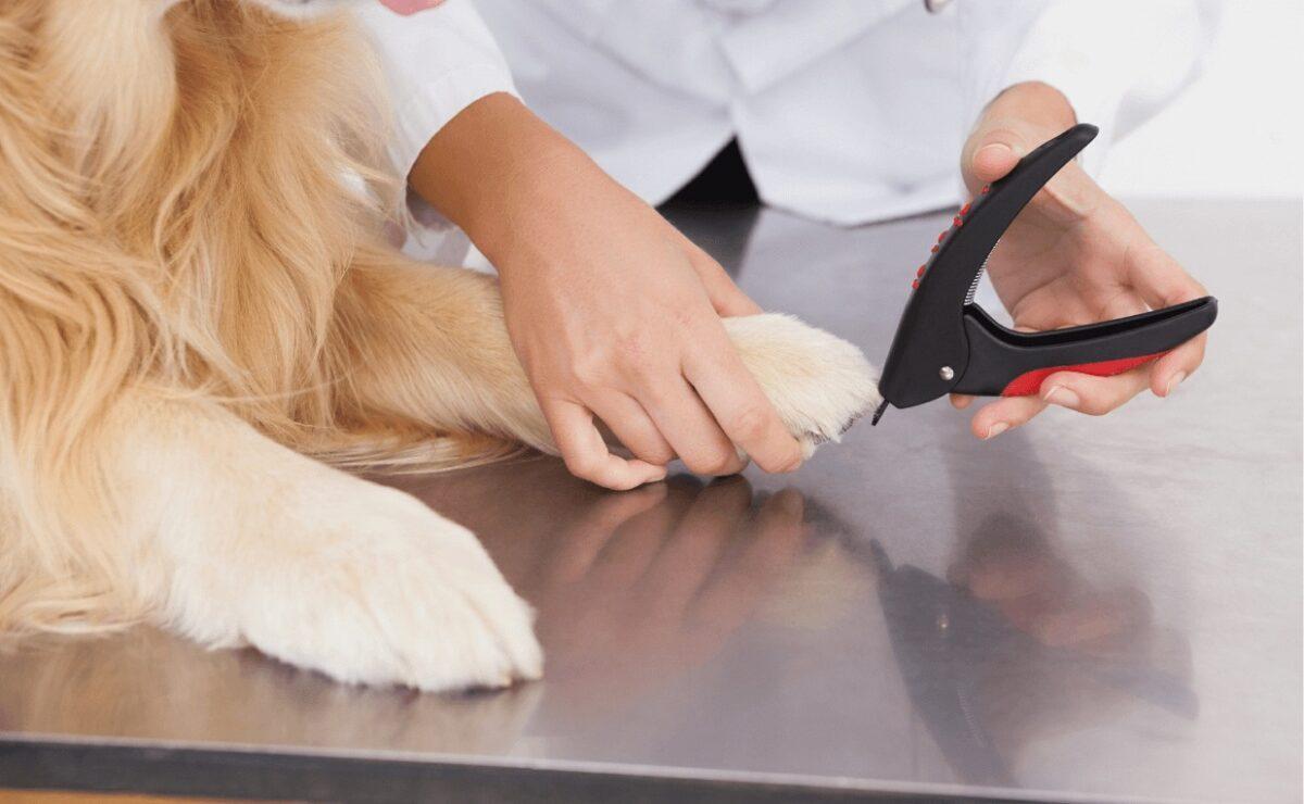طرز استفاده از ناخن گیر گیوتینی سگ