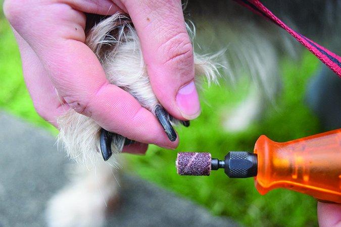 سوهان برقی ناخن سگ