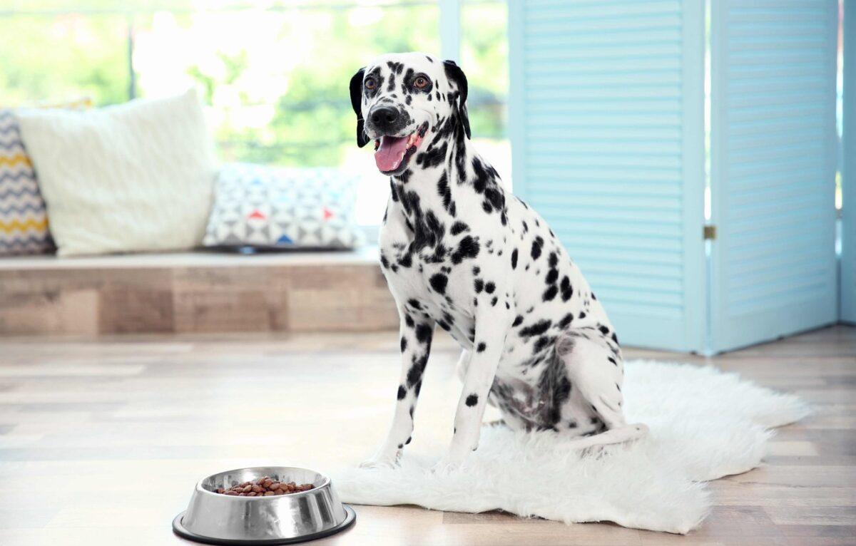 عکس سگ خال دار سیاه و سفید