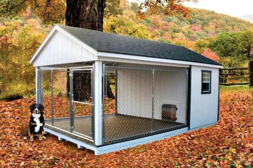 سگ کنار خانه اش در فضای باز