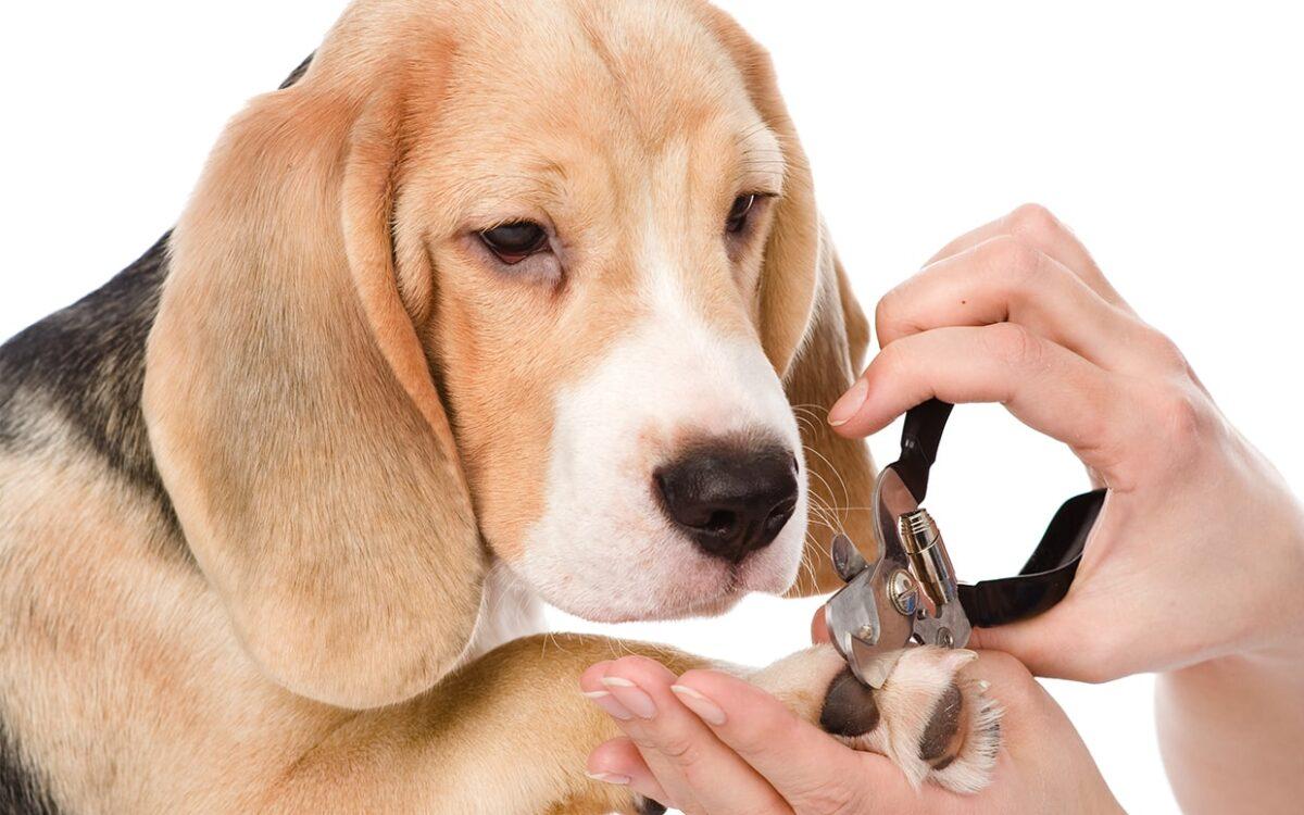 روش کوتاه کردن ناخن سگ