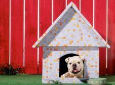 چطور میتونیم سگ رو بیرون از خونه نگه داریم؟