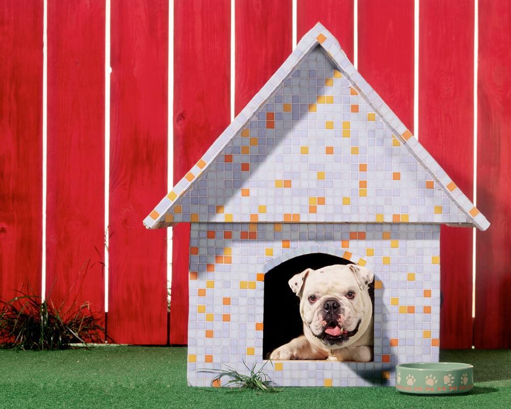نگهداری سگ بیرون از خانه
