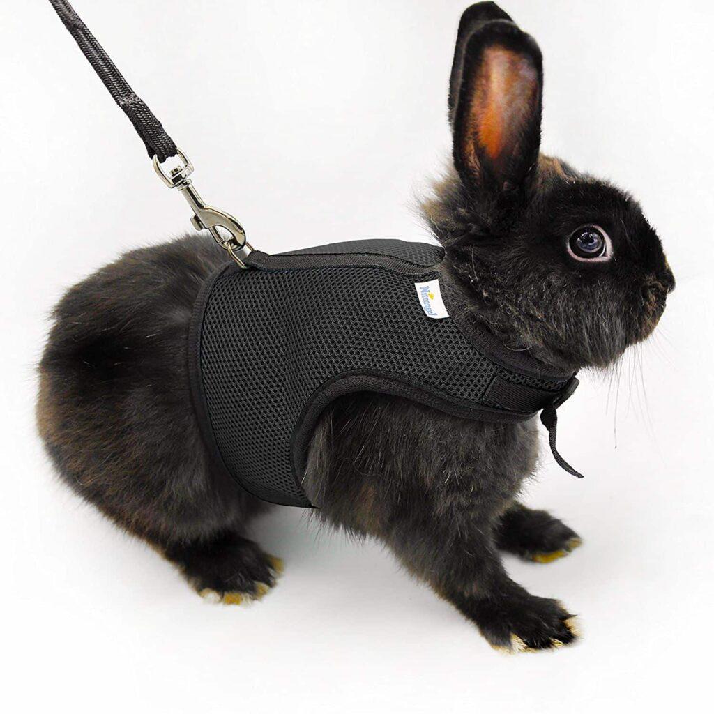 قلاده مخصوص خرگوش سیاه رنگ