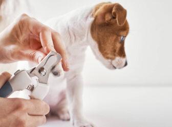 آموزش روش صحیح کوتاه کردن ناخن سگ