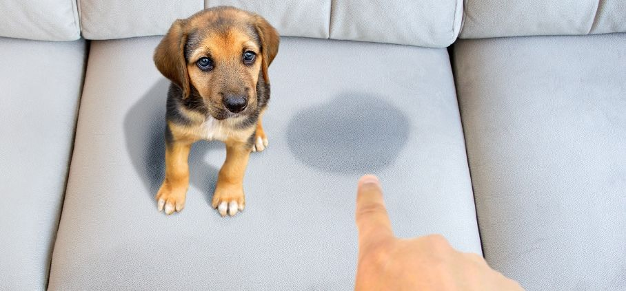 دعوا کردن سگ برای بی اختیاری ادرار