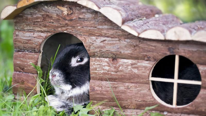 خرگوش مشکی در لانه مخصوص خرگوش