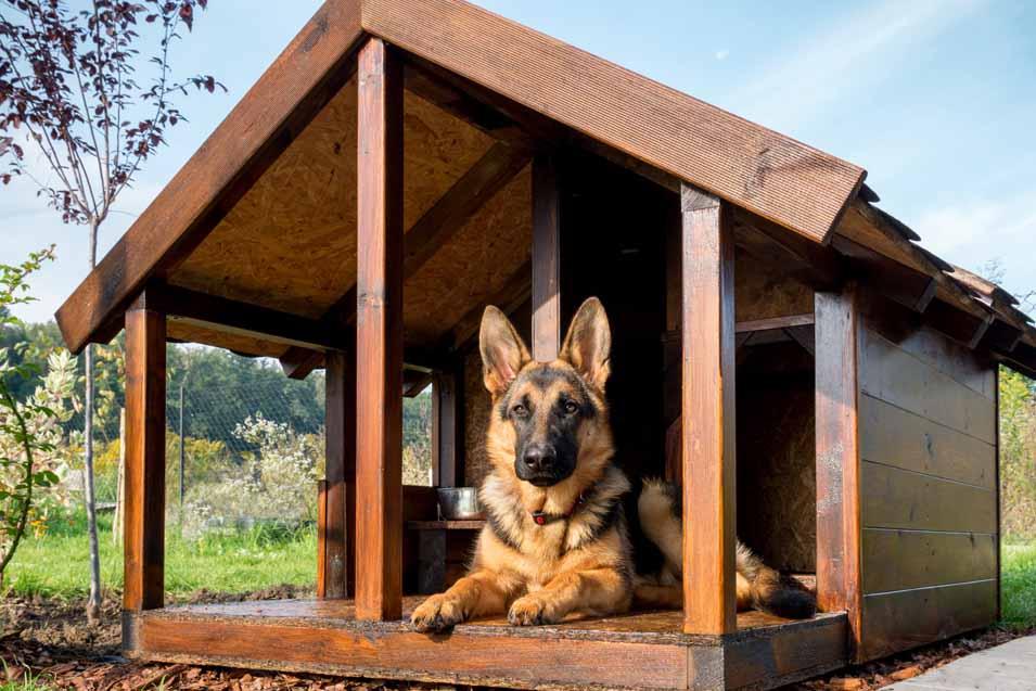 نگهداری سگ ژرمن شپرد بیرون از خانه