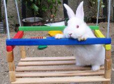 لیست کامل و راهنمای خرید وسایل نگهداری از خرگوش