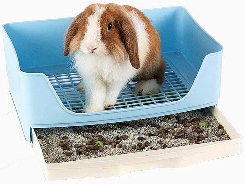 باکس دستشویی خرگوش