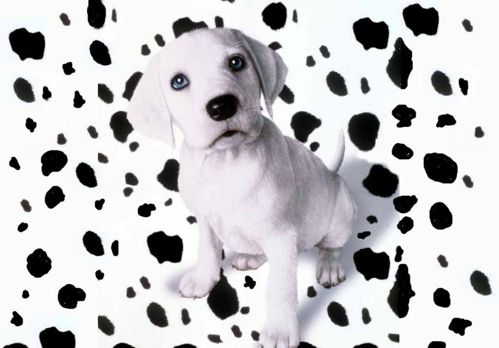 توله سگ دالمیشن سفید