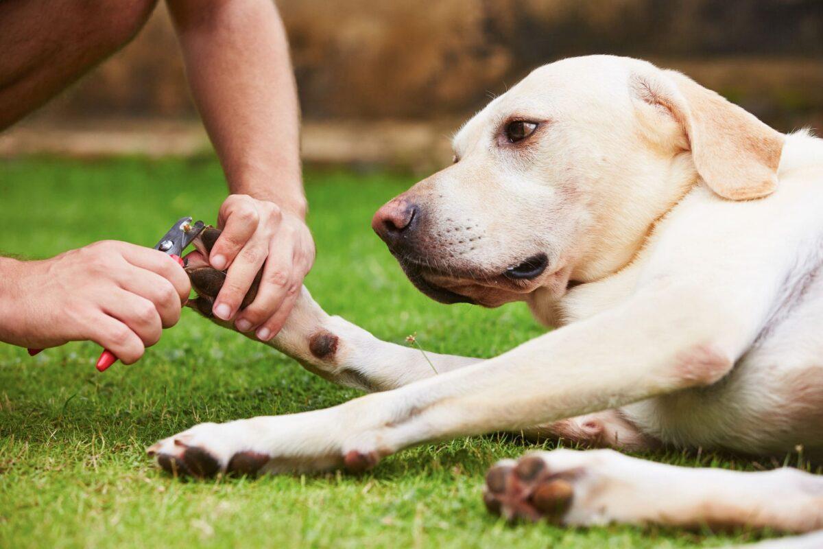 آموزش گرفتن ناخن سگ