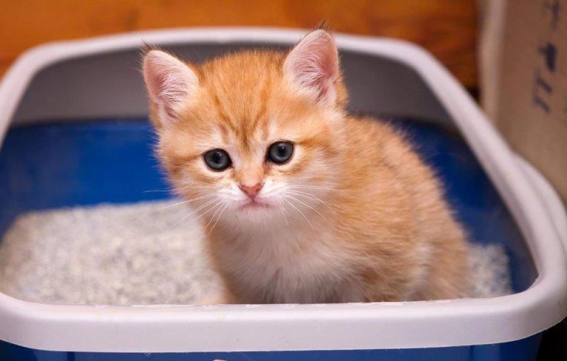 بچه گربه داخل ظرف خاک