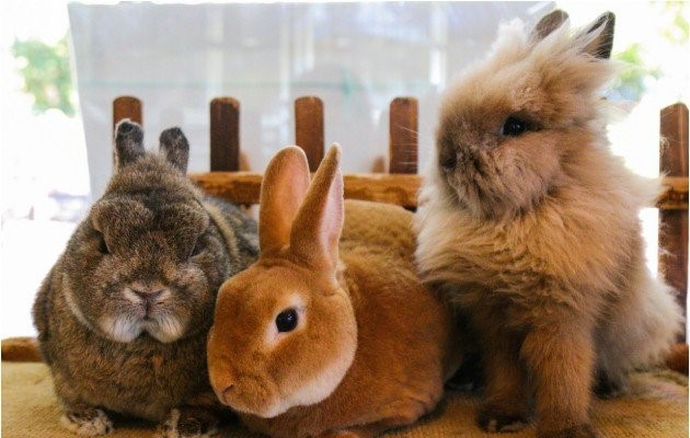 عکس انواع نژاد خرگوش