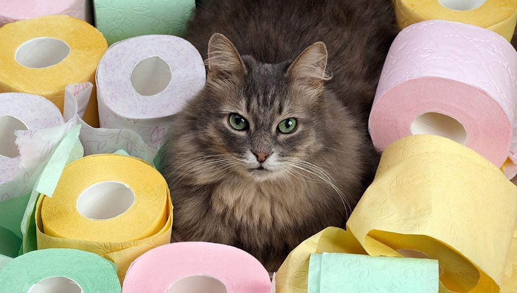 دلایل و راههای درمان اسهال در گربه خانگی