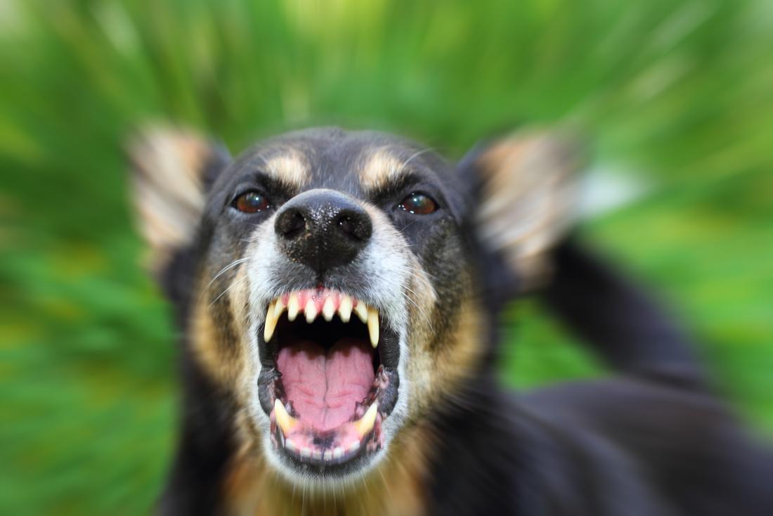 همه چیز در مورد بیماری هاری سگ؛ علائم، درمان و پیشگیری!