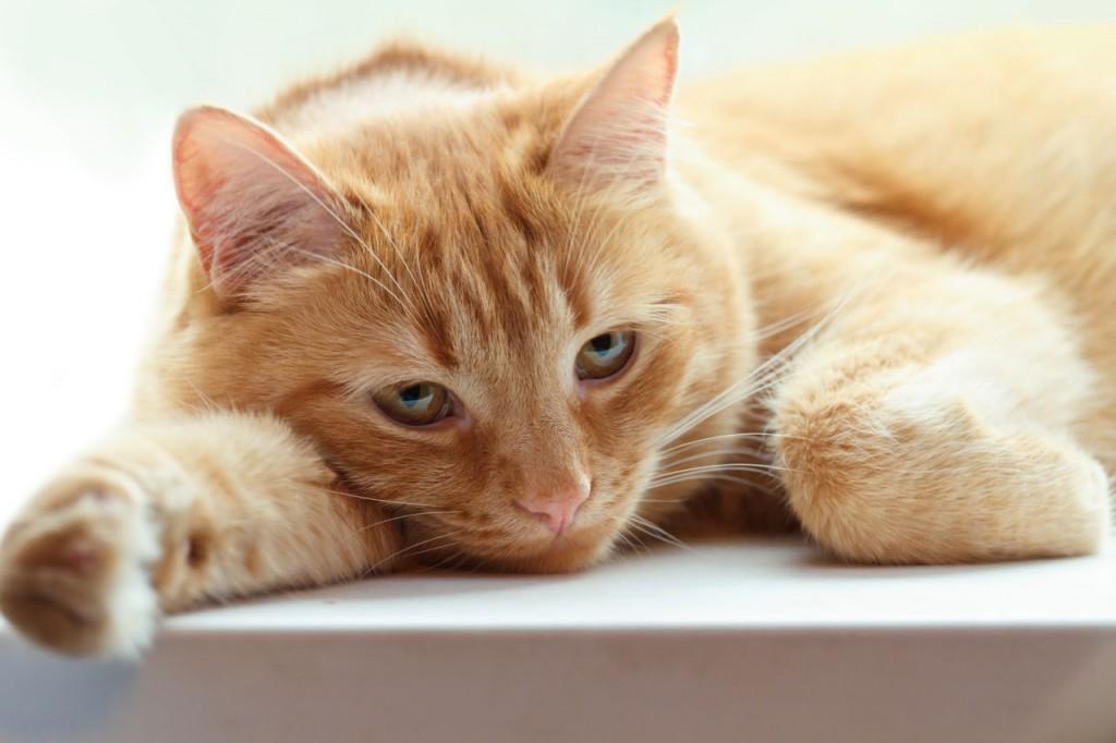 علائم اسهال گربه