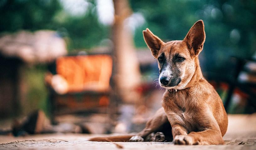 نشانه و علائم هار شدن سگ