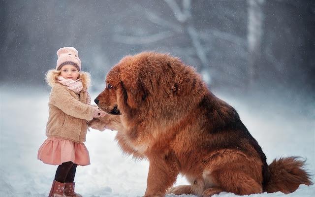 دختربچه در کنار سگ تبتی در برف