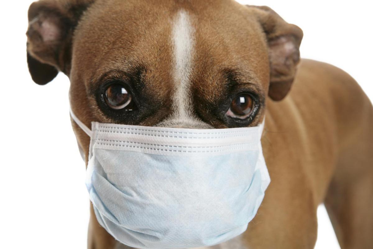 تشخیص مشکلات تنفسی سگ