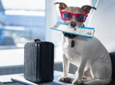 قوانین ورود و خروج حیوانات خانگی از کشور + شرایط و مدارک لازم برای پرواز