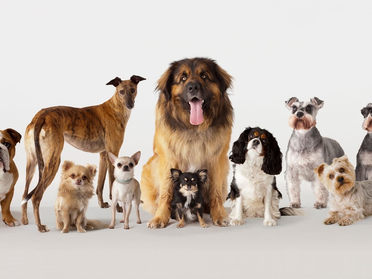 انواع سگ