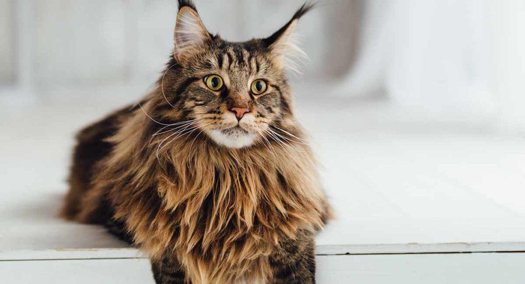 عکس گربه مین کون