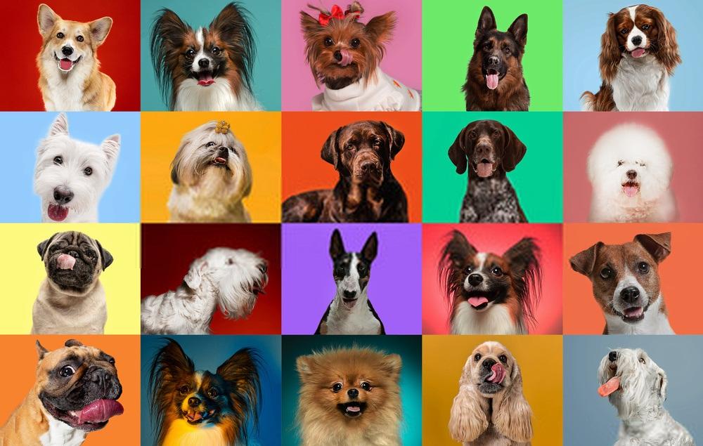 گروه بندی نژادهای سگ