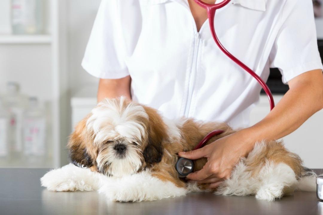 درمان بیماری تنفسی سگ